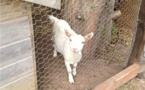New Arrivals in Bramley Lodge